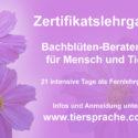 Online-Ausbildung zert. Bachblüten-Berater/in für Mensch und Tier