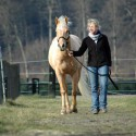 Tanja Rühter, REHEDYK - Horsemanship & NordseeUrlaub