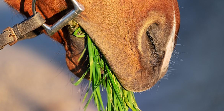 Fruktan - die unsichtbare Gefahr & was jeder Pferdebesitzer wissen sollte