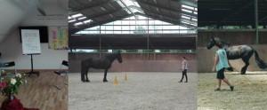 Wenn Pferde Trainer sind: Persönlichkeitsentwicklung mit Pferden - Ein Erfahrungsbericht unserer Freikartengewinnerin
