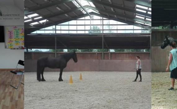 Blog - PferdeTermine.de