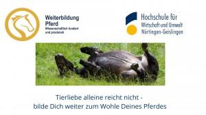 Pferdehaltung und Tierwohl