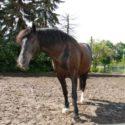 Susanne Lohas: Horse-in-Balance