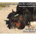 Tierkommunikation Basiskurs nach Penelope Smith - Grundstein für die Intensiv-Ausbildung (preiswerte Übernachtung direkt vor Ort möglich)
