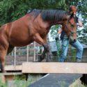 Horse Trail Hessen