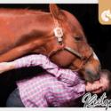 Bodenarbeit unde Horsemanship Erlebnistage mit Lehrpferden