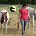 Zusammenspiel von Pferdeosteopathie und Humanphysiotherapie