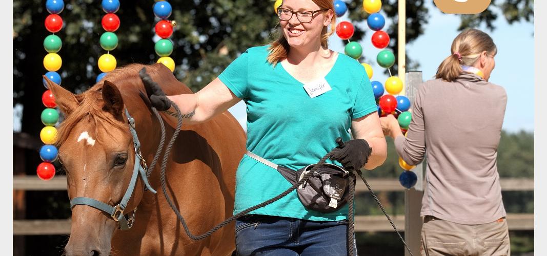 Gelassenheitstraining für Jungpferde - Reitgeist
