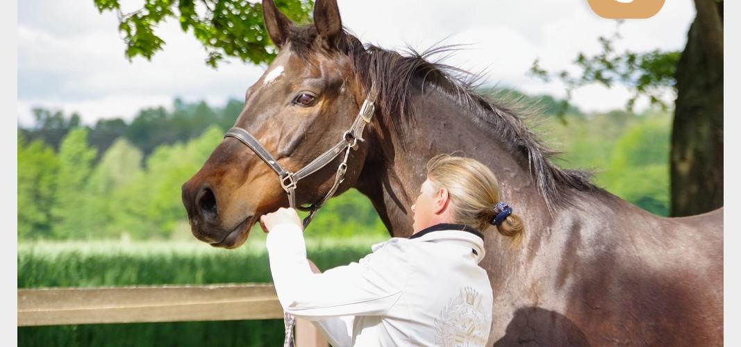 Ausbildung Ganzheitlicher Pferdegesundheitsberater - Reitgeist