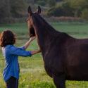Mein Pferd und ich - Workshop für eine entspannte Pferd-Mensch-Beziehung