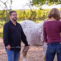Erzähl mir nichts vom Pferd! Einführung in die pferdegestützte systemische Beratung. Ein Seminar für Berater*innen, Coaches und Supervisor*innen