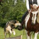 Horse & Dog Trail mit Sabine Lang am 23.-25. April 2021