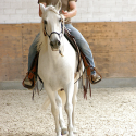 Horsemanship für fortgeschrittene Anfänger • Am Boden und im Sattel