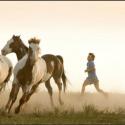 Horsemanship Liberty Kurs - Gemeinsam frei • Parelli Level 2 oder höher