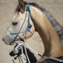 Horsemanship Equipment im Sattel Besser werden mit Halfter, Zügel, Natural Hackamore, Horseman Bridle, Sattel und Bareback Pad
