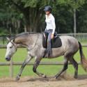 Horsemanship Parelli Patterns im Sattel für Fortgeschrittene • Parelli Level 2 oder höher