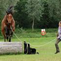 Gymnastizierung mit Horsemanship am Boden/ On Line • Parelli Level 2 und höher