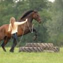 Horsemanship Parelli Patterns am Boden für Fortgeschrittene • Parelli Level 2 oder höher