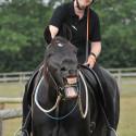Horsemanship Verfeinerung - Am Boden und im Sattel • Parelli Level 2 oder höher