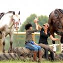 Horsemanship Problemlösungen INDIVIDUELL & INTENSIV • Parelli Level 2 oder höher