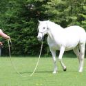 Horsemanship für Anfänger/ Einsteiger • Parelli Level 1