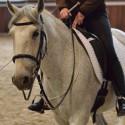 Sitzschulung Teil 1 & 2 • Den Sitz verbessern • Besser Reiten • Mit oder ohne eigenes Pferd