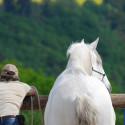 Schnuppertag Horsemanship inklusive Gutschein