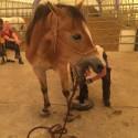 Hufkurs • Theorie und Praxis für Pferdebesitzer