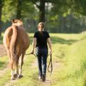 Pferde sicher führen