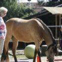 Ausbildung Seminar Pferdegestütztes Coaching