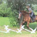 Pferde über den Rücken trainieren - Rumpfträger und Bauchmuskeltraining-Biomechanik