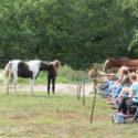 Intensivseminar bei Anna Kannegieter (Empower your Horse)