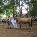 """Öffentliches Training """"Gelassen & Selbstsicher"""" bei Anna Kannegieter (Empower your Horse)"""