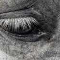 Schmerzen beim Pferd