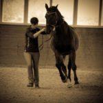 Profilbild von Stefanie Seidl - Ganzheitliches Pferdetraining nach klassischen Grundsätzen